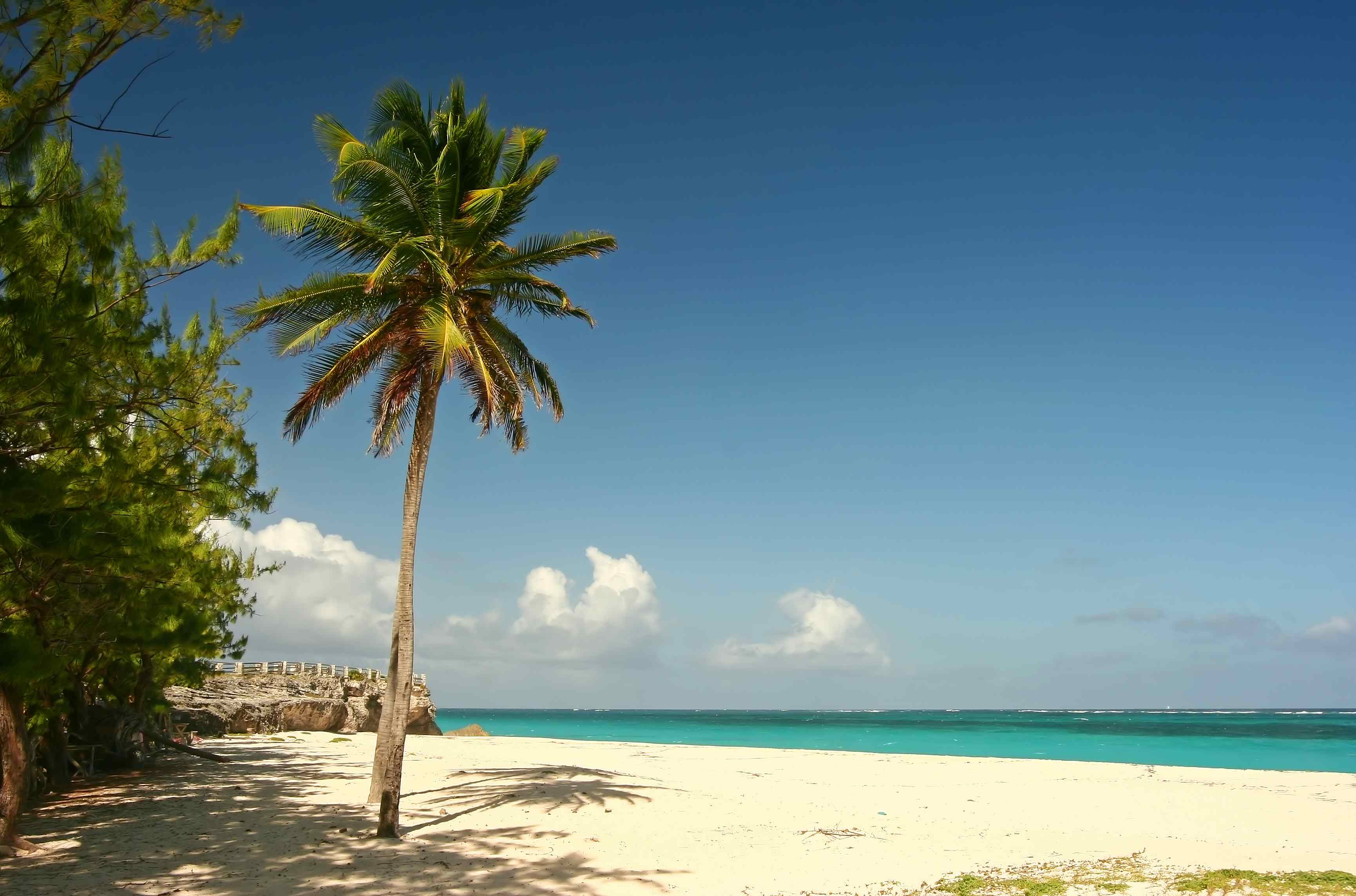 Strand Brustverbesserung Palme